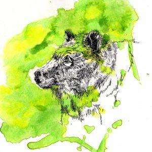 Bär (Tusche, Aquarell)